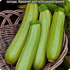 Семена Кабачок белоплодный Корнишонный, 1 г, АЭЛИТА
