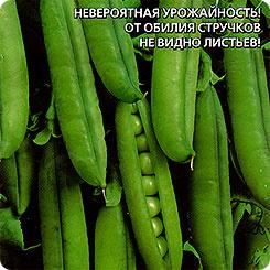 Семена Горох сахарный Малолистный, 8 г, Уральский дачник