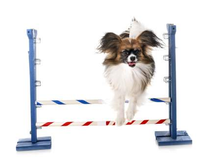 Товары для дрессировки собак