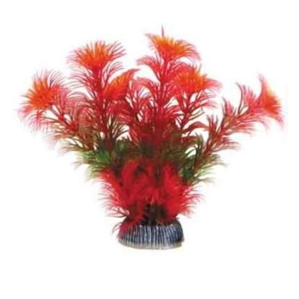 """Растение 1399 """"Амбулия"""" красная, 100мм"""