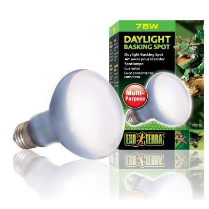 Неодимовая лампа для террариума Exo Terra Sun Glo Daylight, дневного света, R20, 75 Вт