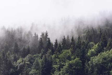 Фотообои Divino Decor Туманный лес 400х270