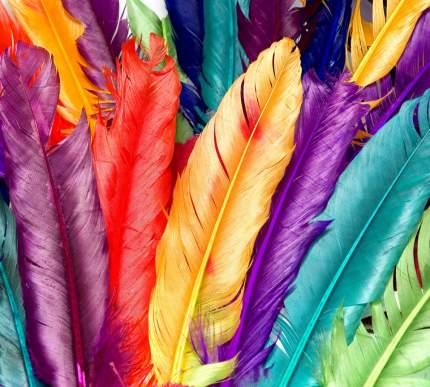 """Фотообои Divino Decor """"Разноцветные перья 300х270"""""""