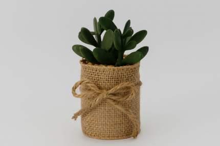 Искусственное растение в джутовом кашпо Hoff Суккулент