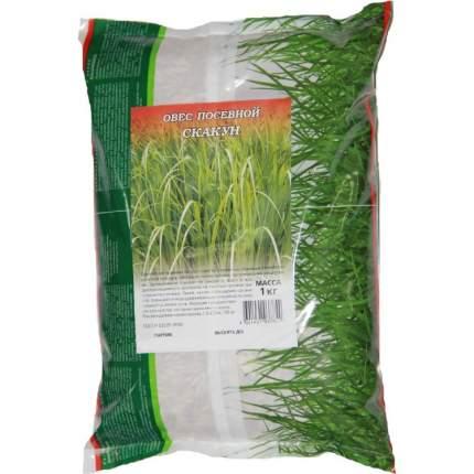 Семена газонных трав и сидератов Гавриш Овес посевной Скакун вес 1 кг