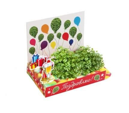 Набор для выращивания Happy Plants Поздравляю! hps-220 базилик, горчица