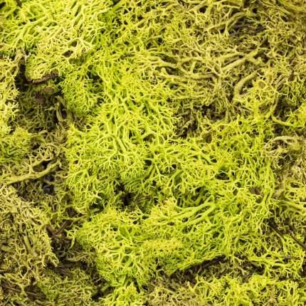 Природные материалы для флористики Glorex 63803605