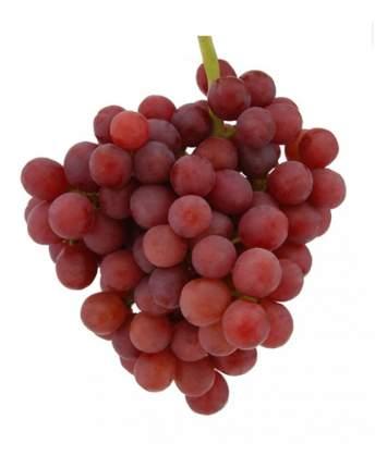 Виноград Киш-Миш красный