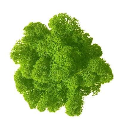 Стабилизированный мох Наш Кедр 4784 зеленый 0,7 кг