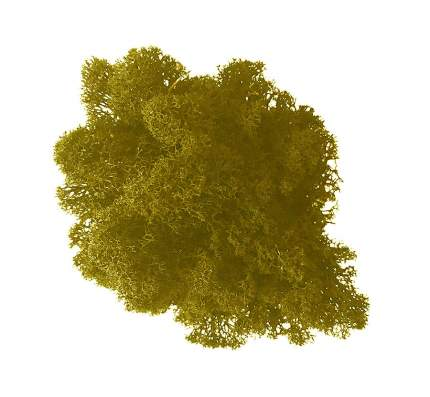 Стабилизированный мох Наш Кедр 3249 желтый 0,7 кг