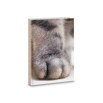 Книга для записей Listoff Пушистые лапы А6+ 80л ЕТИ680310