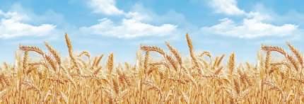 """Кухонный фартук """"Пшеница"""" 3000х600 мм, АБС пластик, термоперевод"""