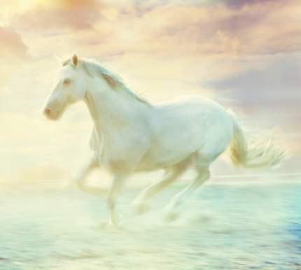 Фотообои Московская Обойная Фабрика Белая лошадь 3031-М