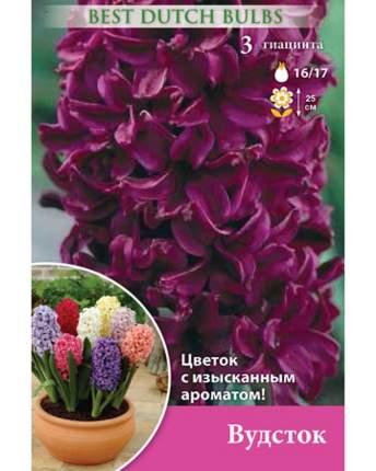 Гиацинт Вудсток Русский огород НК032777