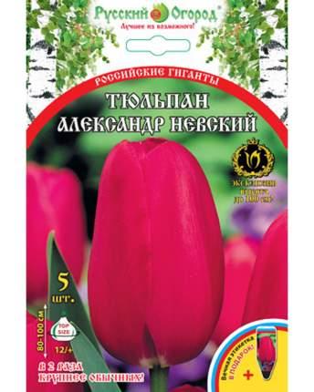 Тюльпан Александр Невский Русский огород 201318