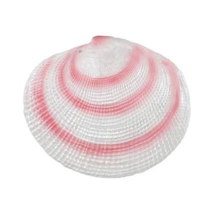 Грот для аквариумов TRIXIE Shells, в ассортименте, 6-9см, 8 шт