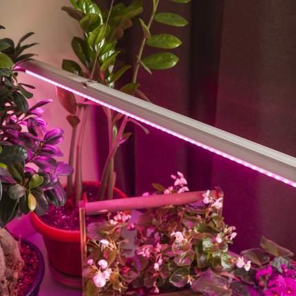 Светильник фито Эра светодиодная 16Вт цв.св.:многоцветный (FITO-16W-T5-N)