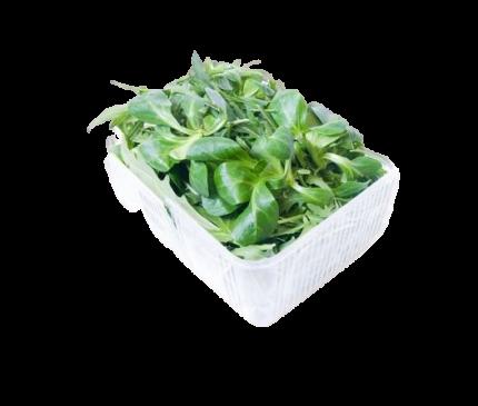 Салатная смесь Metro Chef Руккола-Корн 125 г