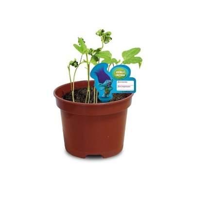 Набор для выращивания Сад Троллей. Ипомея Цветана