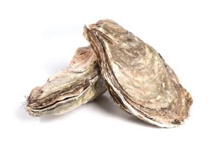 Устрицы Ла Маре 200/350 курильские дальневосточные живые ~1 кг