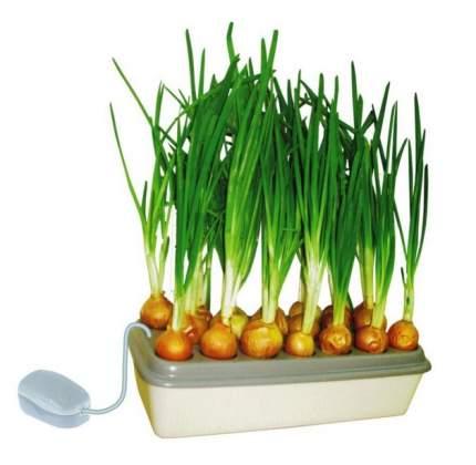 Набор для выращивания Здоровья Клад Луковое счастье зеленый лук