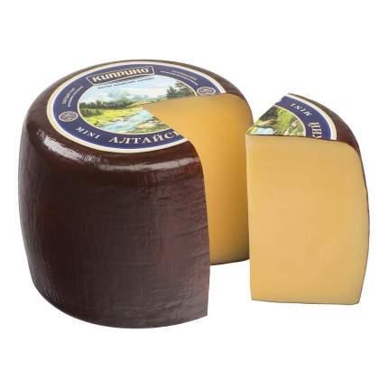 Сыр твердый Киприно Алтайский 50% ~1,5 кг