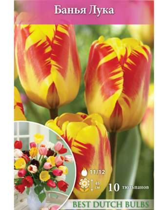 Тюльпан Банья Лука Русский огород НК032893