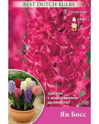 Гиацинт Ян Бос Русский огород НК032869