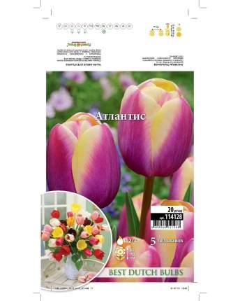 Тюльпан Атлантис Русский огород 114128