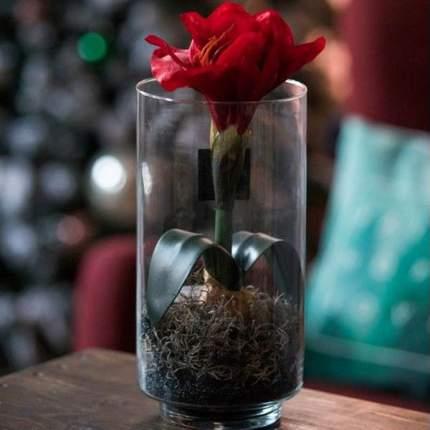 Амариллис искусственный красный 30 см в вазе 950245
