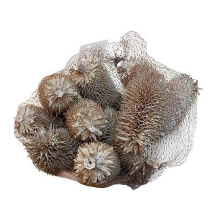 Декоративные элементы натуральные. Ворсовальные шишки, 9-10 см,