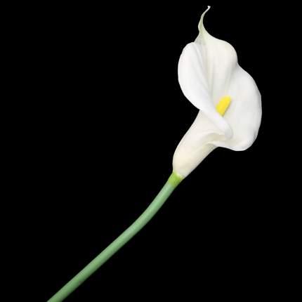 """Цветок искусственный """"Калла"""""""
