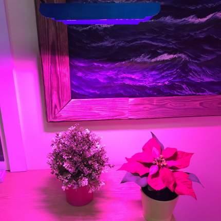 Светодиодный светильник для растений Espada 44605 E-COBFitoFS30, 30W, 85-265V