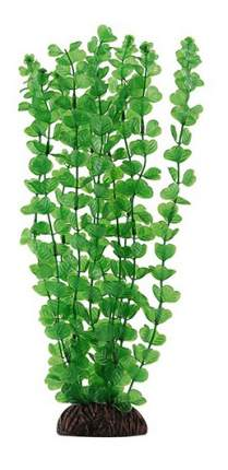 Laguna Растение Бакопа зеленая, 30 cм