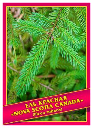 Семена Ель Красная «Nova Scotia Canada», 0,1 г Симбиоз