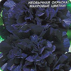 Семена Шток-роза Черный вихрь, 10 шт, Плазмас