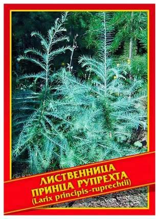Семена Лиственница Принца Рупрехта, 10 шт, Симбиоз