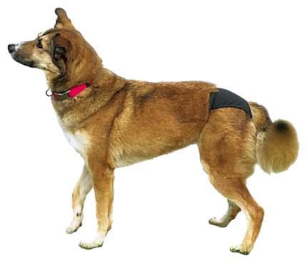 Трусы для собак TRIXIE размер S, черный