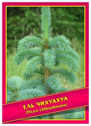 Семена Ель Чихуахуа, 0,1 г Симбиоз
