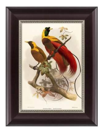 Картина Картины в Квартиру Красная Райская Птица (25х33 см)