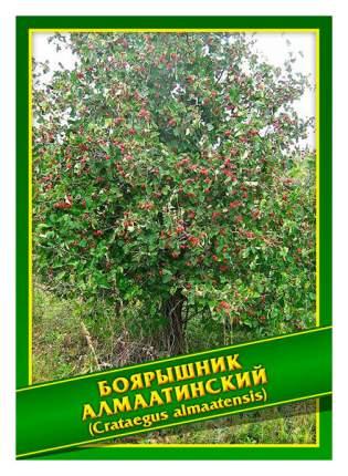 Семена Боярышник Алмаатинский, 1 г Симбиоз