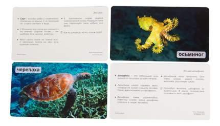 Развивающие карточки Умница Мир на ладошке 1,5, ЖИВОЙ ОКЕАН 2006