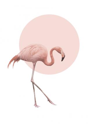 Постер Фламинго 50х70 в тубусе