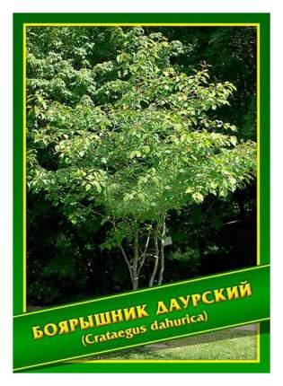 Семена Боярышник Даурский, 1 г Симбиоз