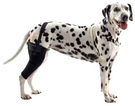 Протектор для собак Kruuse Rehab Knee Protector, на правое колено, XL