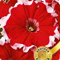 Семена Петуния многоцветковая Калиффо F1 Красная, 10 шт,  Элитная клумба Гавриш