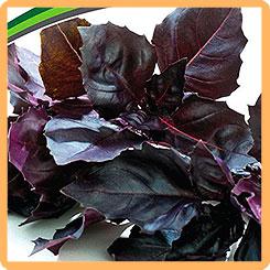 Семена Базилик фиолетовый Рози, 1 г Partner