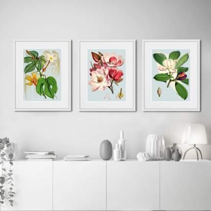 Коллекция Himalaya Plants (из 3-х картин), Картины в Квартиру