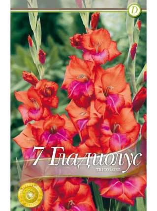Семена Гладиолус крупноцветковый TRICOLORE, 7 шт, Kebol
