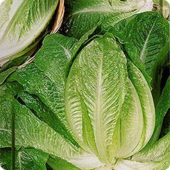 Семена Салат ромен Баллон, 460 шт, Дом семян